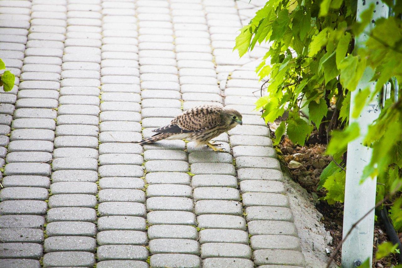 Птички вот такие там живут