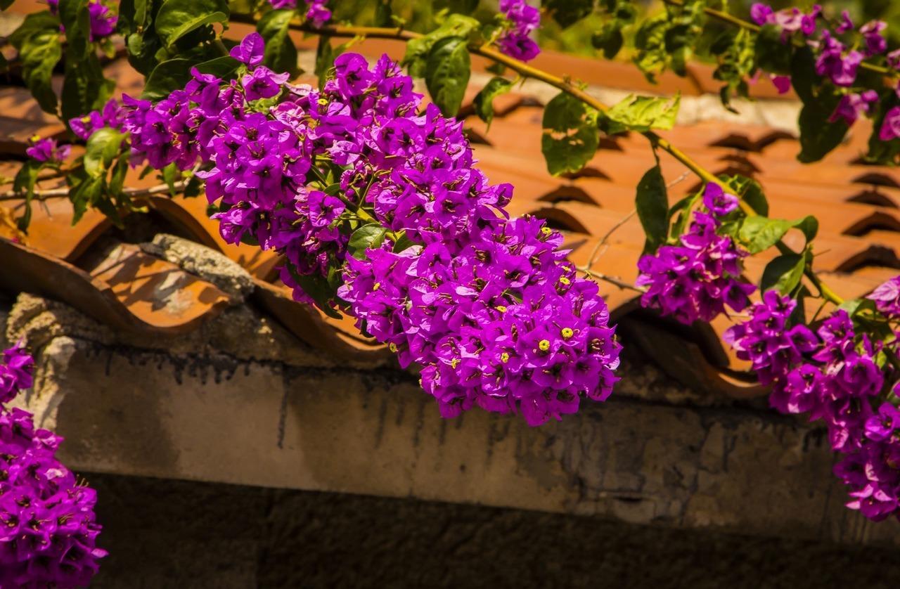 Пула, Цветы
