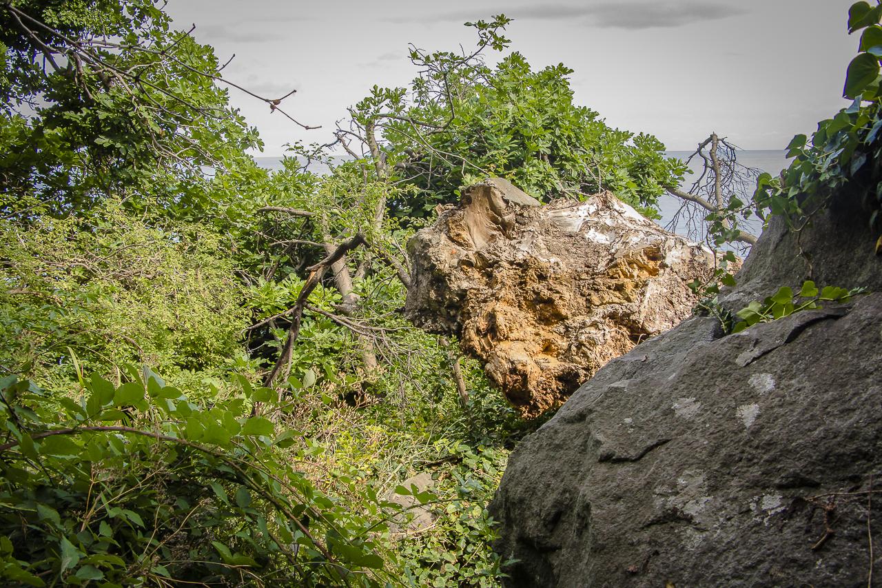 Воронцовский парк Алупка
